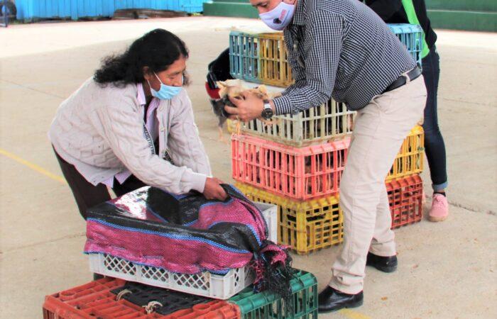 Municipio de Nangaritza apoya a emprendedores en crianza de pollos